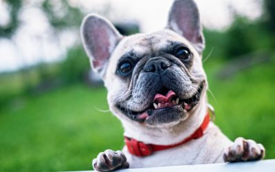 Hemp CBD for Pets